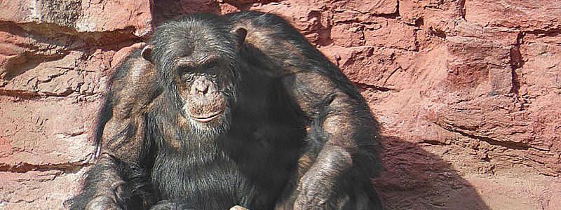 zoom-ape04a