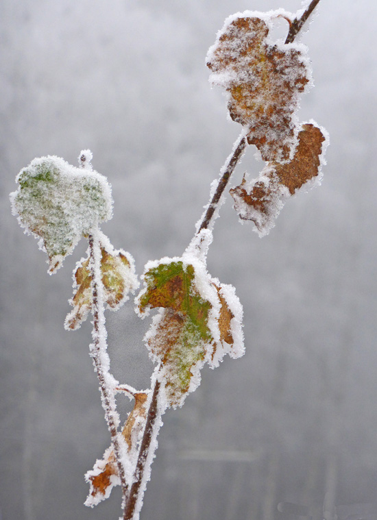 touch-of-frost12