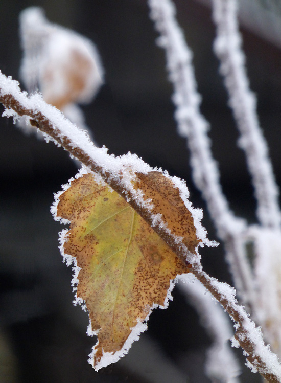 touch-of-frost13